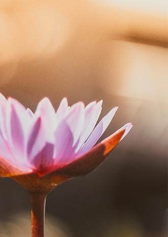 lotus, relaxation, meditation, bien-etre, santé